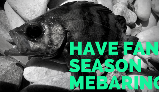 メバリングを楽しむ時期まとめ!春・夏・秋・冬、季節別の特徴や釣り方、数やサイズを伸ばすために釣行するべきタイミングなどをご紹介!